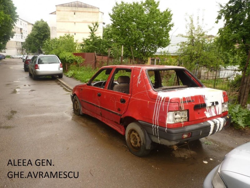 Zeci de rable abandonate în municipiul Botoșani. Ce riscă proprietarii! FOTO